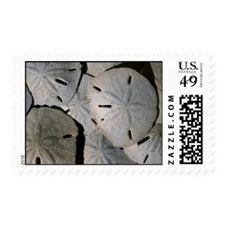 Sand dollar pile postage stamps