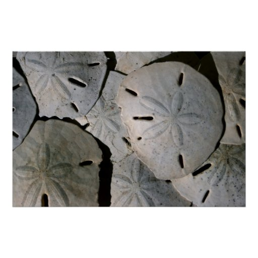 Sand dollar pile posters