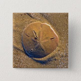 Sand Dollar Revealed On Beach | Hilton Head Island Button