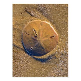 Sand Dollar Revealed On Beach   Hilton Head Island Postcard