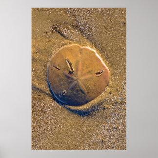 Sand Dollar Revealed On Beach | Hilton Head Island Poster