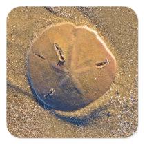 Sand Dollar Revealed On Beach | Hilton Head Island Square Sticker