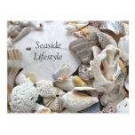 Sand Dollar Seaside Lifestyle New Addres Postcard