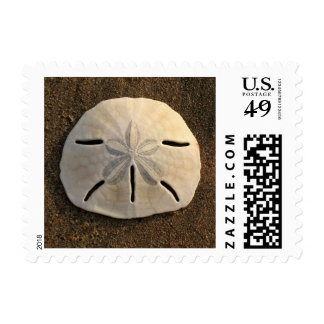 Sand Dollar Shell Postage Stamp (Color)