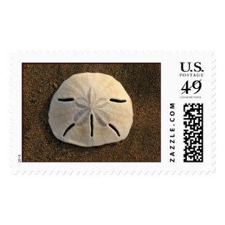 Sand Dollar Stamp (Color)