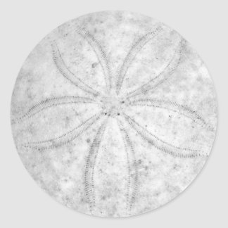 Sand Dollar Sticker