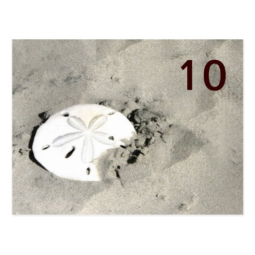 Sand Dollar Table Number Cards Postcard