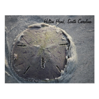 Sand Dollar with Small Crab Riding Postcard
