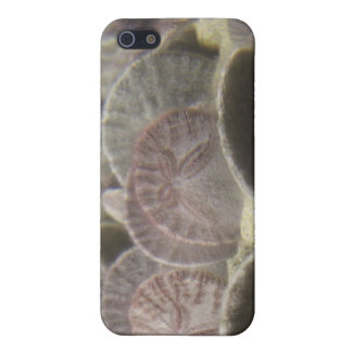 Sand Dollars iPhone 5/5S Cover