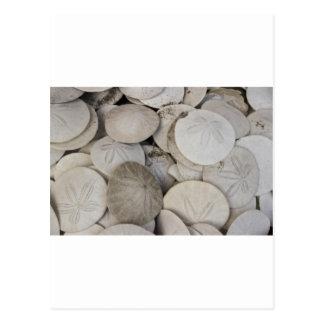 Sand dollars sea shell postcard