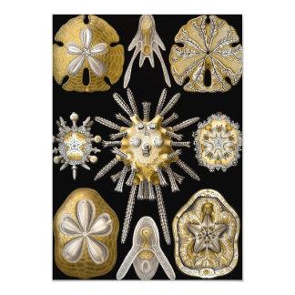 Sand Dollars Sea Urchins by E. Haeckel Invitations