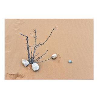 sand dune stones nature ikebana tree branches photo art