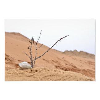 sand dune stones nature ikebana tree branches art photo