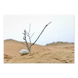 sand dune stones nature ikebana tree branches photo print