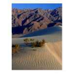 Sand Dunes Death Valley Post Cards