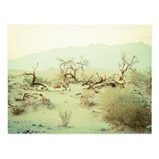 Sand Dunes of Death Valley Postcard