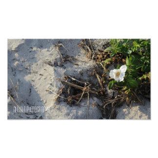 Sand Flower Photograph