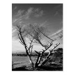 Sand Lake, Oregon Black and White Postcard