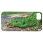 Sand Lizard Male Lacerta Agilis iPhone 5 Cases