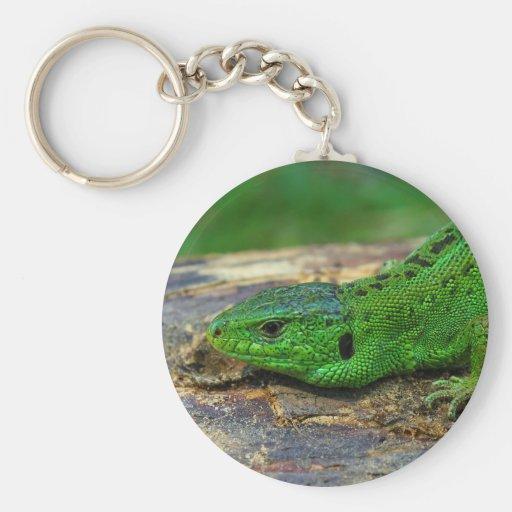 Sand Lizard Male Lacerta Agilis Key Chains