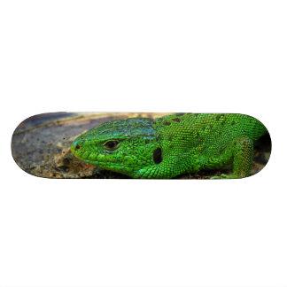 Sand Lizard Male Lacerta Agilis Skateboard Deck