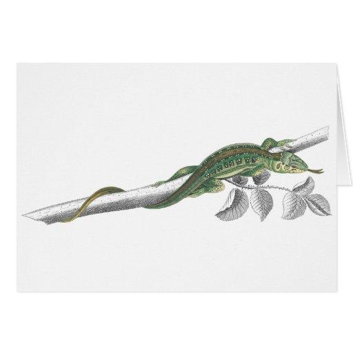 Sand Lizard Notecard Card