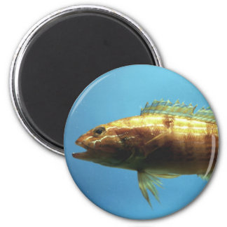 Sand Perch Fish 2 Inch Round Magnet