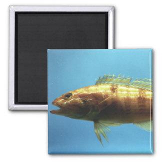 Sand Perch Fish 2 Inch Square Magnet