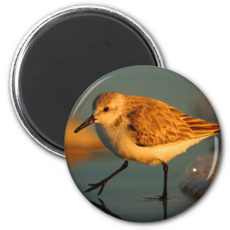 sand piper 2 inch round magnet