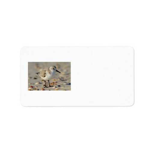 Sand Piper and Seashells Address Label