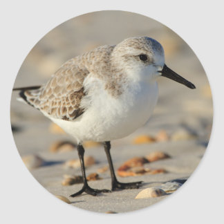 Sand Piper and Seashells Classic Round Sticker