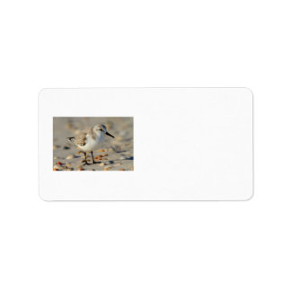Sand Piper and Seashells Label