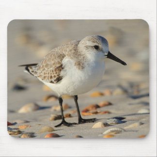Sand Piper and Seashells Mouse Pad