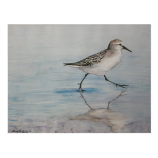 Sand Piper Bird Art Postcard