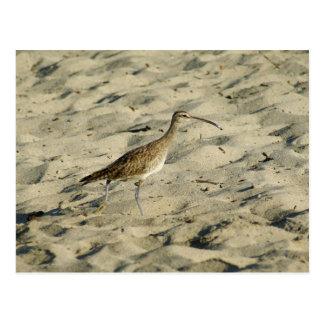 Sand Piper Bird, Bucerias Beach, Mexico Postcard