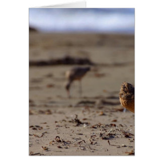 Sand Piper Bird Card