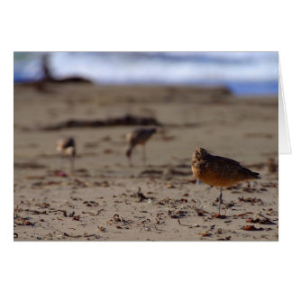 Sand Piper Bird Greeting Card