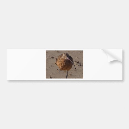 Sand Piper Bird On Beach Bumper Stickers