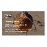 Sand Piper Bird On Beach Double-Sided Standard Business Cards (Pack Of 100)