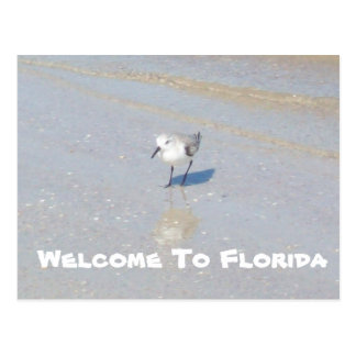 Sand Piper Bird Postcard