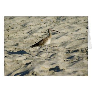Sand Piper on Bucerias Beach Card