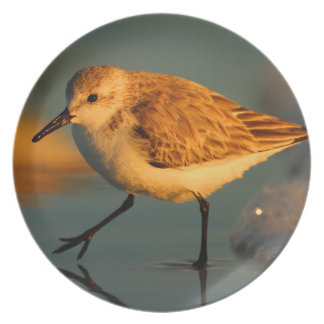 sand piper plate