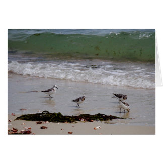 Sand pipers greeting card