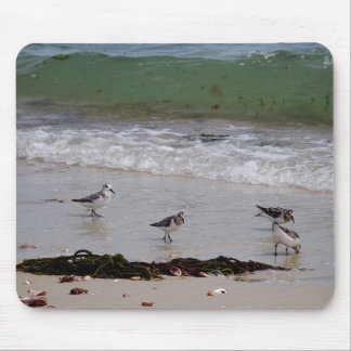 Sand pipers mouse pad