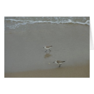 Sand Pipers Photo and Card by Lorette Starr