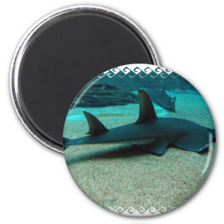 Sand Shark Magnet Refrigerator Magnet