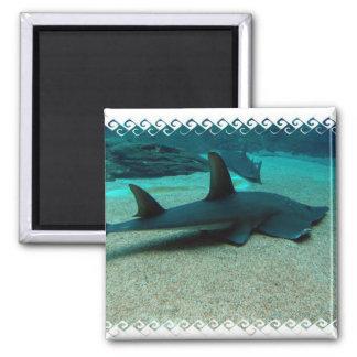 Sand Shark Magnet Fridge Magnets