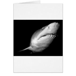 Sand Tiger Shark Card