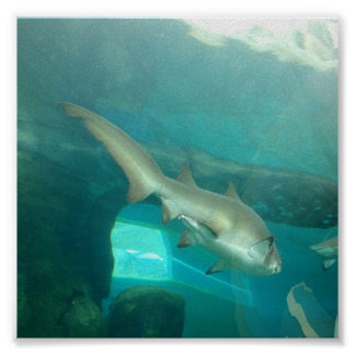 Sand Tiger Shark Print