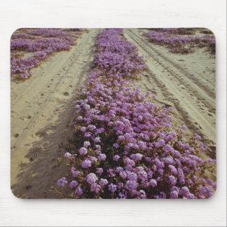 Sand verbena and sand road, Yuman Country, Ari Mouse Pad